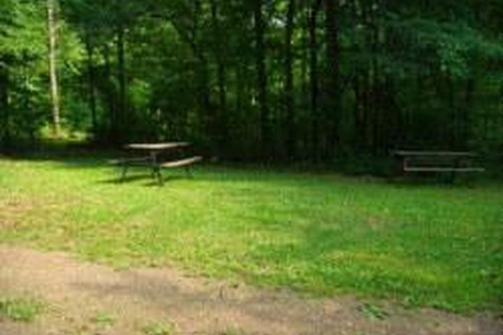 Pet Friendly Tall Oaks Campground