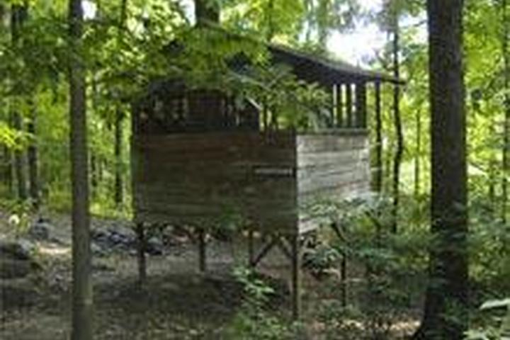 Pet Friendly The Treehouse Camp at Maple Tree Campground