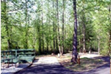 Pet Friendly Creekwood RV Park Resort & Cabins