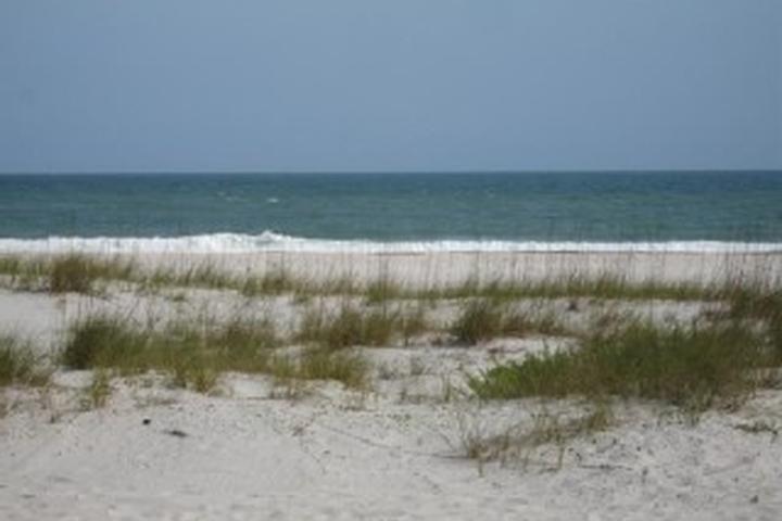 Pet Friendly Hotels In Gulf Shores Al Bring Fido