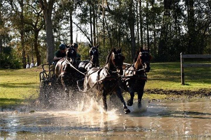 Pet Friendly Black Prong Equestrian Center