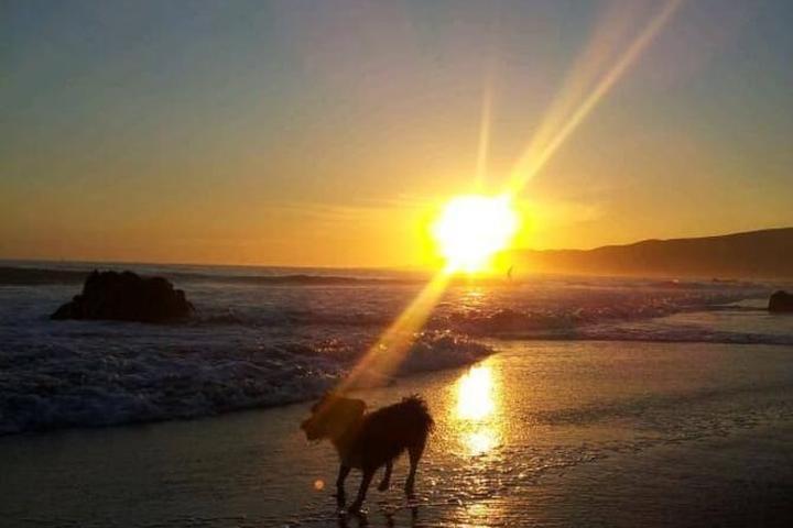 Pet Friendly Vacation Rentals in Cayucos, CA - Bring Fido