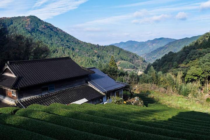 Pet Friendly Dazaifu Airbnb Rentals