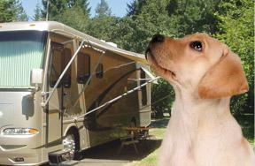 Clay S Park Camping Resort Pet Policy