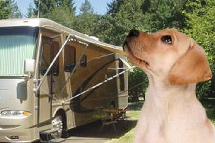 Pet Friendly Clay's Park Camping Resort