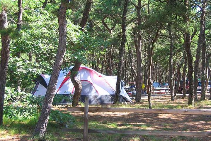 Pet Friendly Adventure Bound Camping Resort
