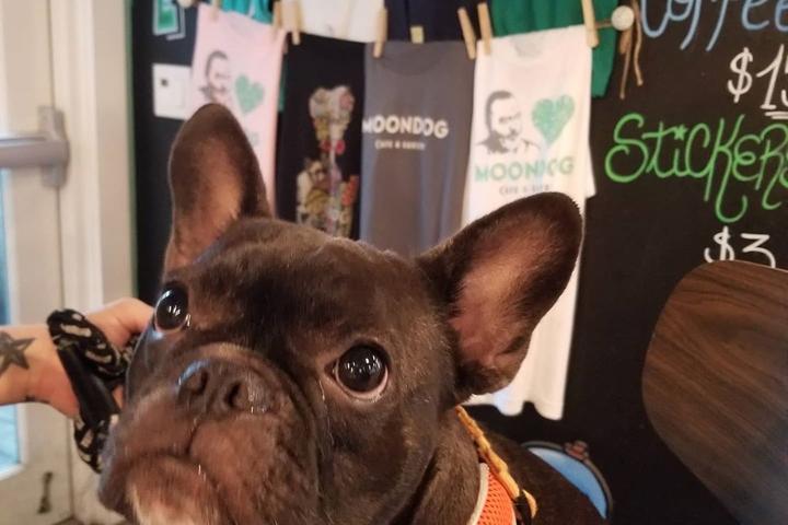 Pet Friendly Moondog Cafe