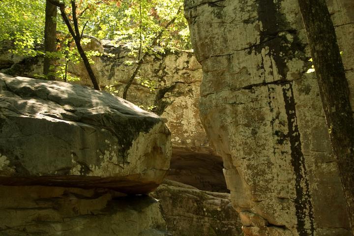 Pet Friendly Moss Rock Preserve