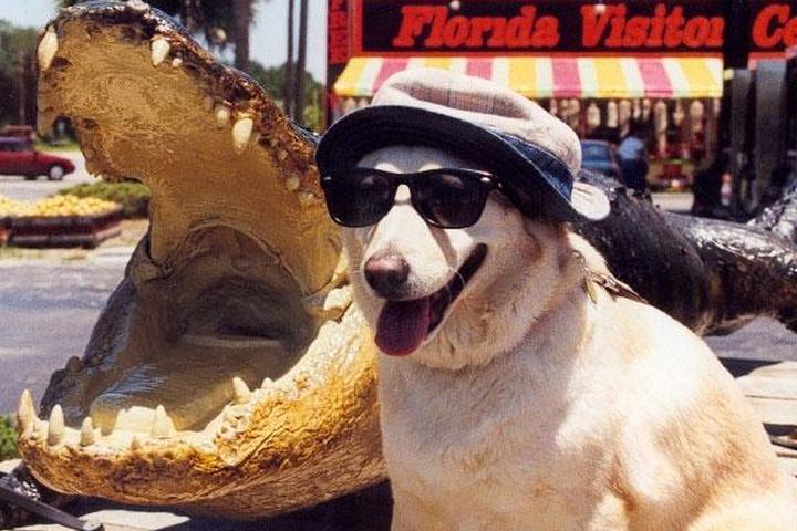Dog Owner's Guide to  Orlando, FL