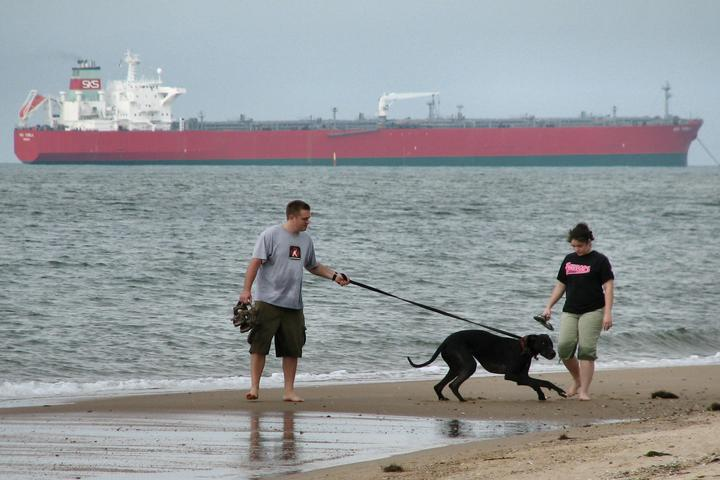 Dog Owner's Guide to  Virginia Beach, VA
