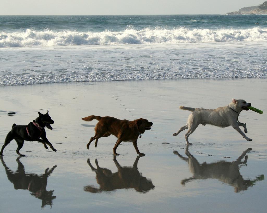 Follow the Leader, Carmel Beach in Carmel CA