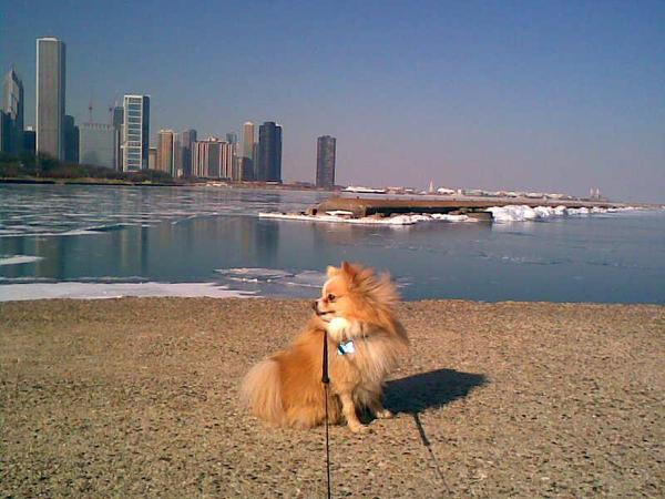Little Dog. Big City