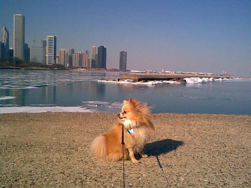 Little Dog. Big City