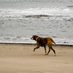 Morning Run on the Beach