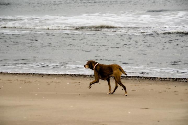 Dog Owner's Guide to  Ocean City, MD