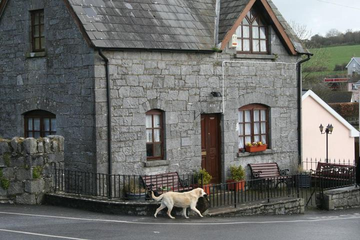 Dog Owner's Guide to Cashel, IE