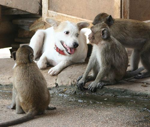Dog with Monkeys