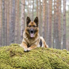 Dog on Mossy Hill