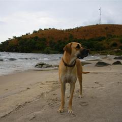 Dog Beach in Malawi