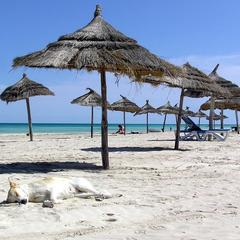 Stray Dog on the Beach