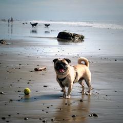 Arroyo Burro Dog Beach