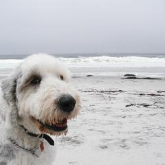 Carmel Dog Beach