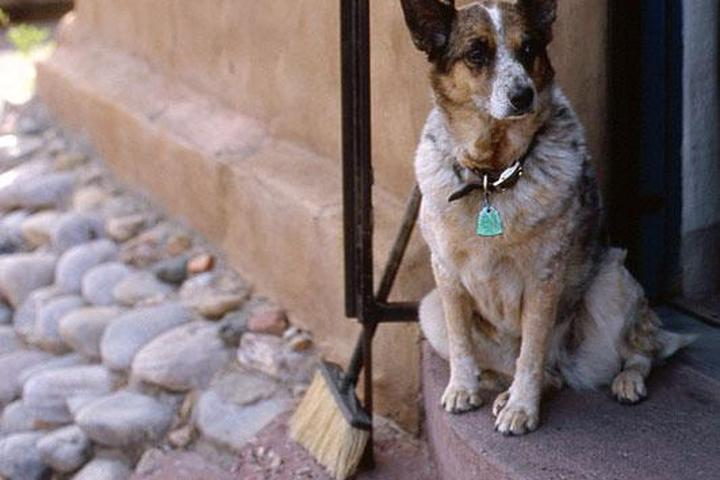 Dog Owner's Guide to  Santa Fe, NM