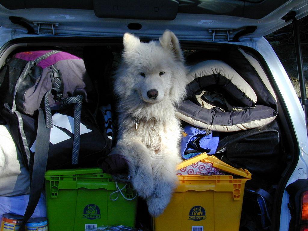 Yosemite Dog Friendly Campgrounds