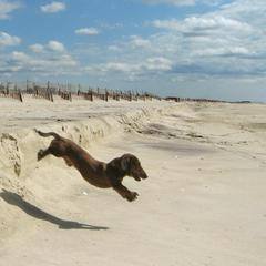 Mastic Beach Weenie
