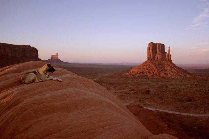 Dog Owner's Guide to Monument Valley, UT