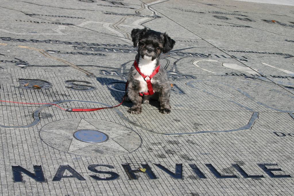 Dog Friendly Nashville TN