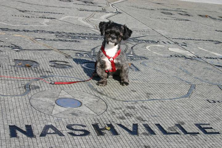 Dog Owner's Guide to  Nashville, TN