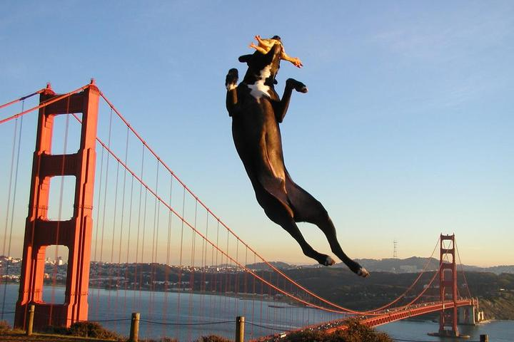 Dog Owner's Guide to  San Francisco, CA
