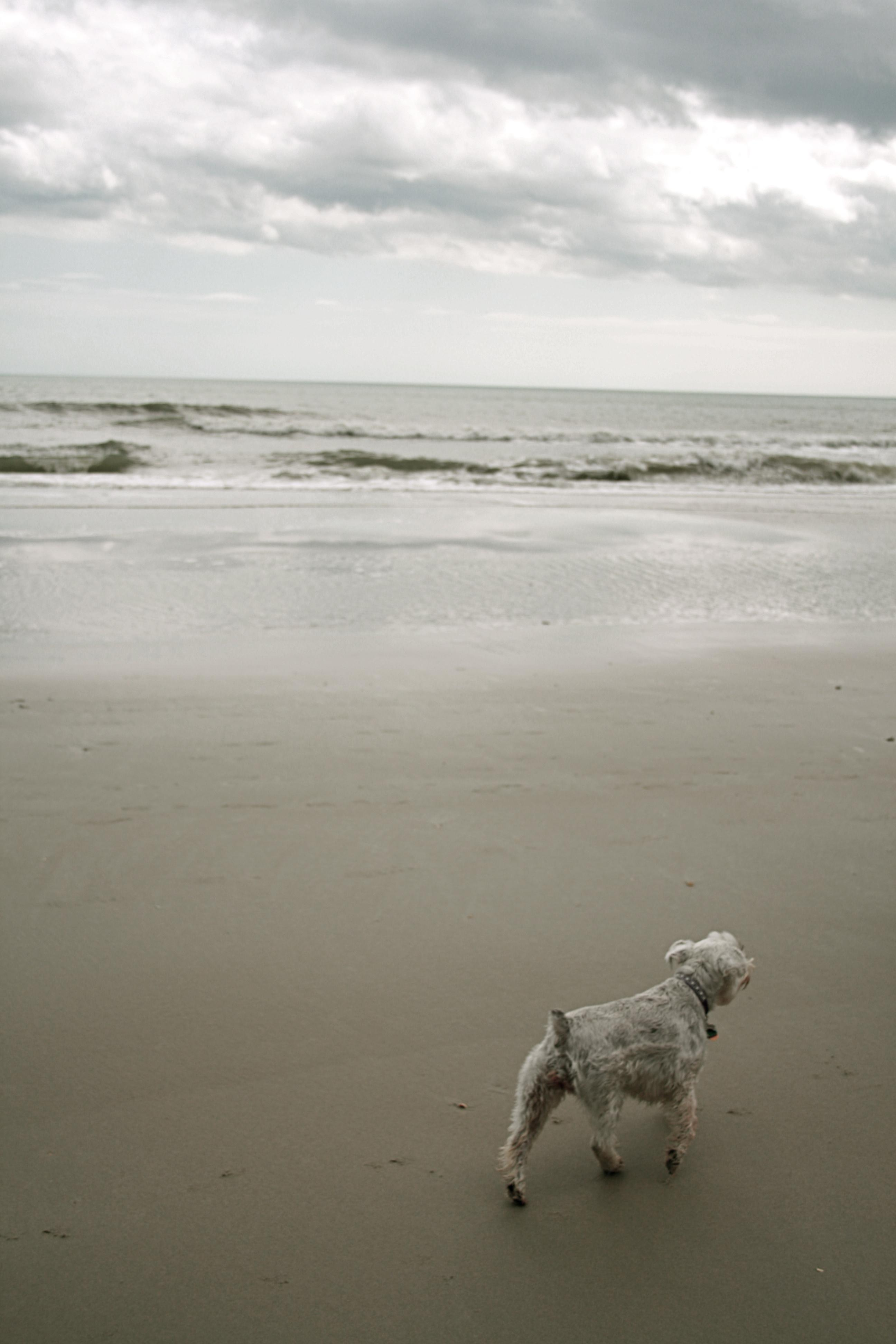 Dog Boarding In Pawleys Island Sc