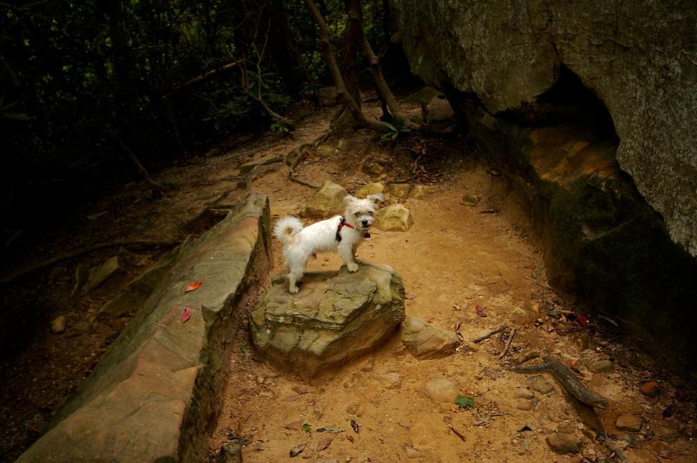 Dog Friendly Hiking Trails In Lexington Ky