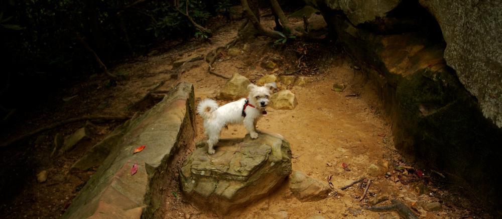 Dog Friendly Lexington, KY - Bring Fido