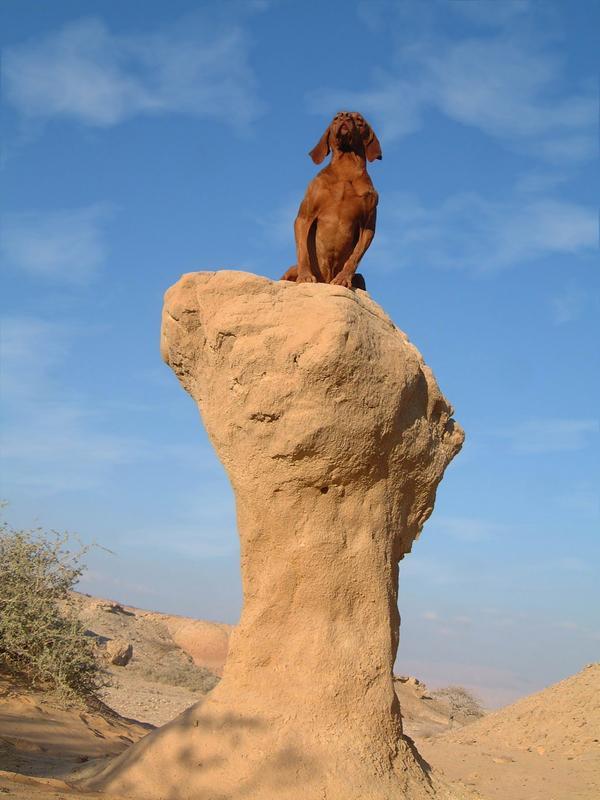 Dog Friendly Hotels In Moab Utah
