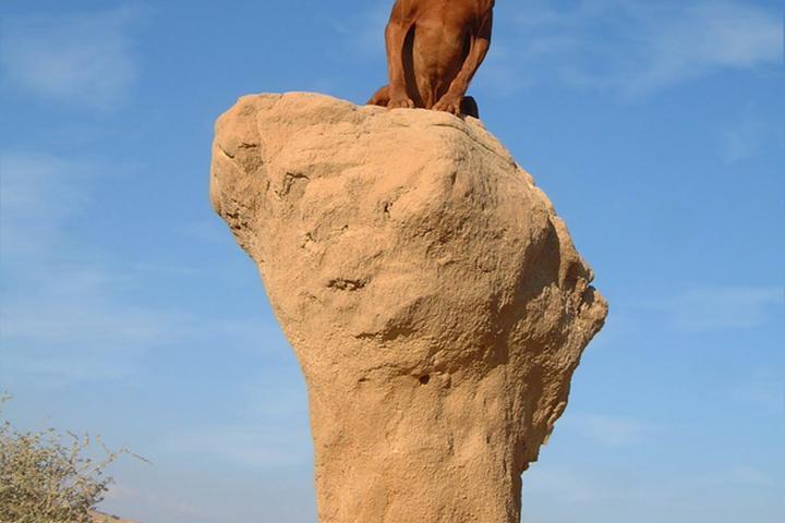Dog Owner's Guide to Moab, UT