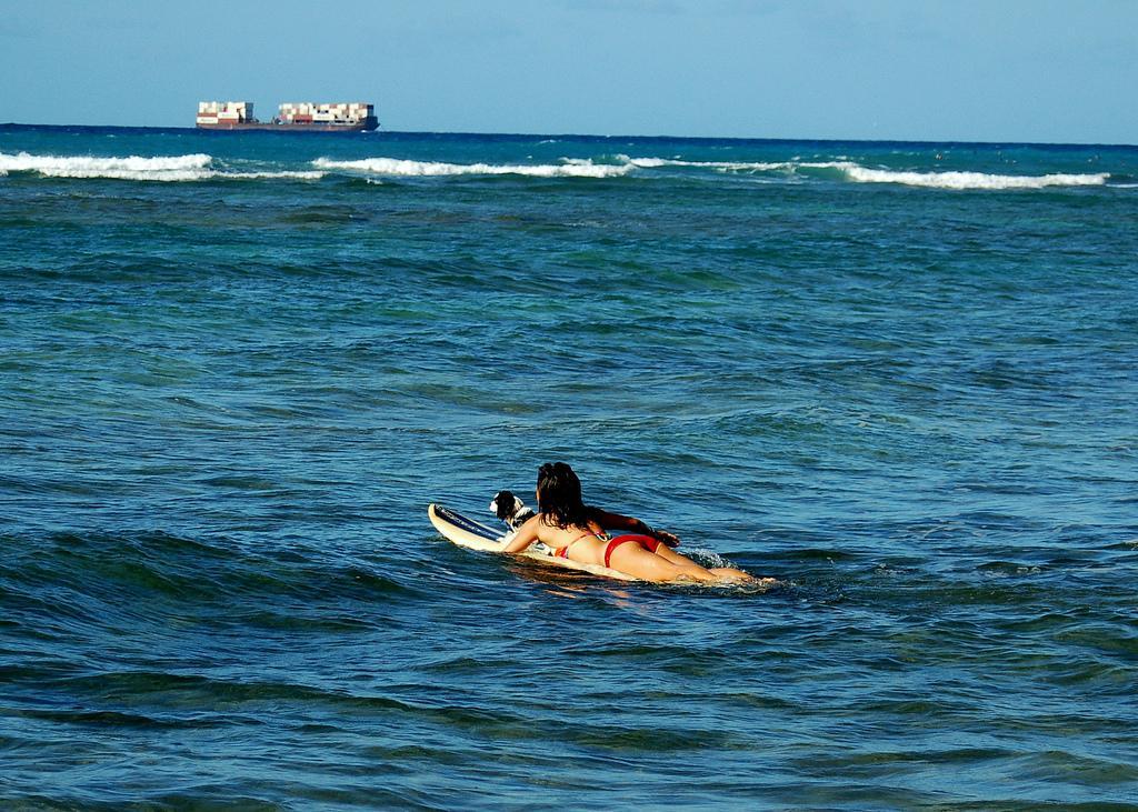 Dog Boarding Kennels Honolulu