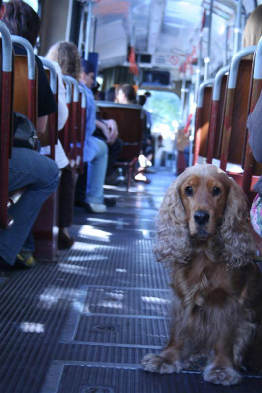 Dog on the Tram