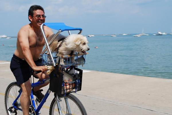 Dog in Bicycle Basket