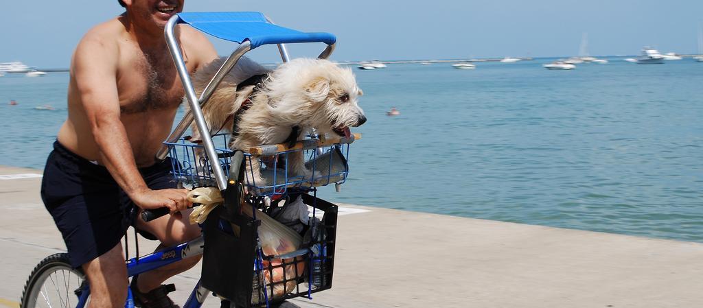 Dog Friendly Illinois - Bring Fido