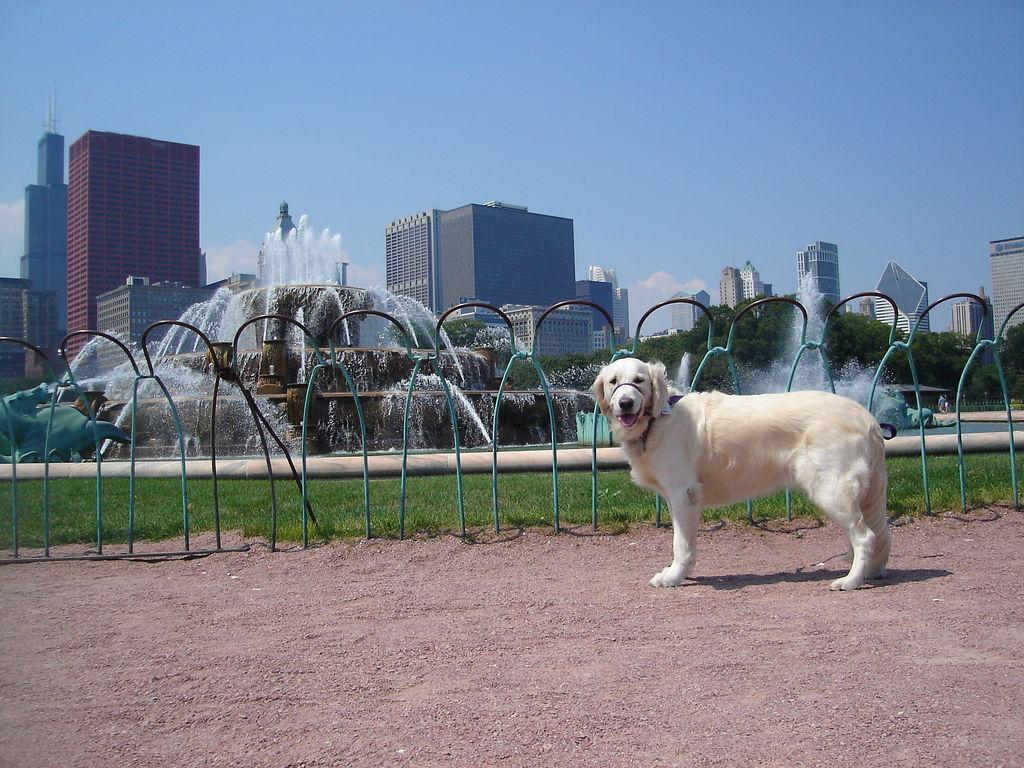 Dog at Buckingham Fountain