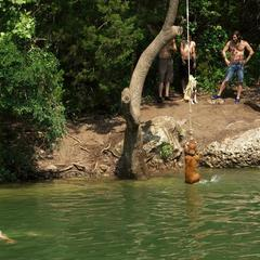Dog on a Rope