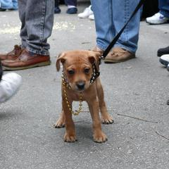 Krewe of Barkus Parade