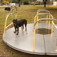 Dog on Merry-Go-Round
