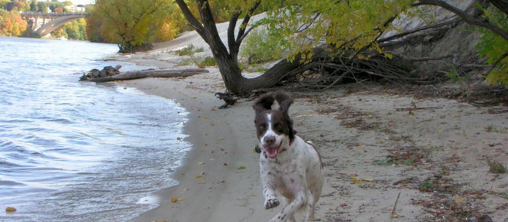 Dog Friendly Minnesota - Bring Fido
