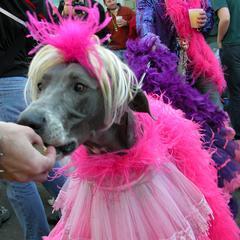 Dog Wearing Princess Costume