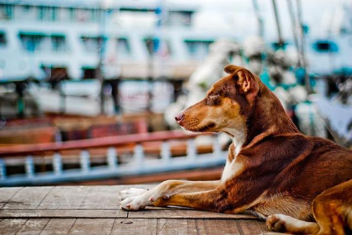 Dog Owner's Guide to Belem, BR