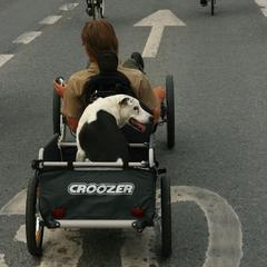 Dog Croozer in Helsinki